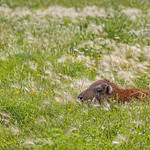 Gail Marchessault's photo